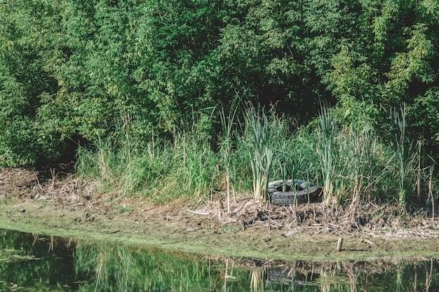 La rive de la rivière obstruée. problème écologique