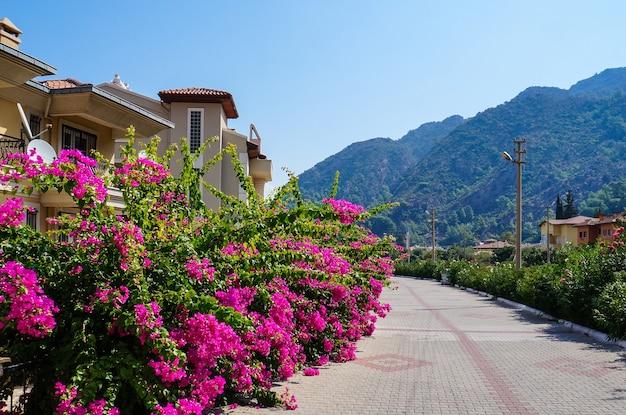 Riviera touristique avec plantes fleuries, soleil et hôtels sur fond de montagnes boisées