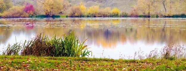 Rivière avec des arbres colorés et des roseaux sur les rives en automne, feuilles d'automne tombées sur l'herbe au bord de la rivière