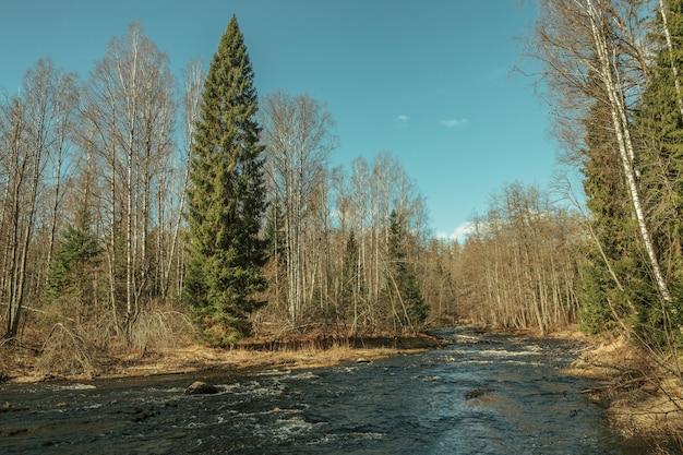 La rivière coule dans la forêt en automne