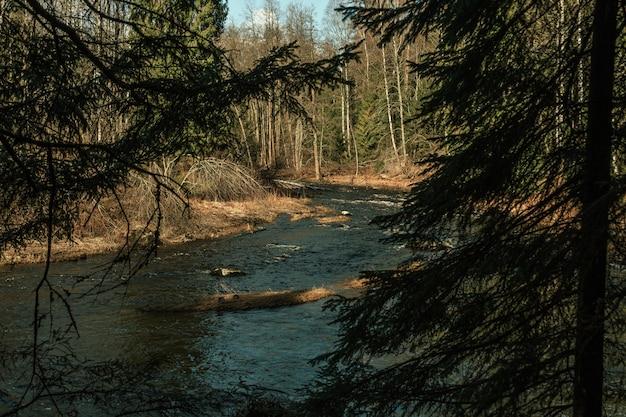 La rivière coule à travers la forêt de pins