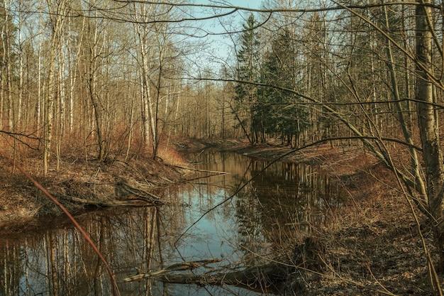 La rivière dans la forêt d'automne