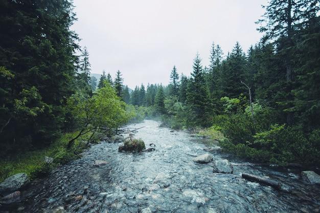 Rivière dans les tatras de montagne polonaise près de morskie oko à zakopane
