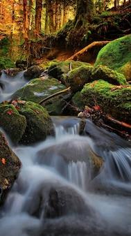 Rivière déchaînée, nature