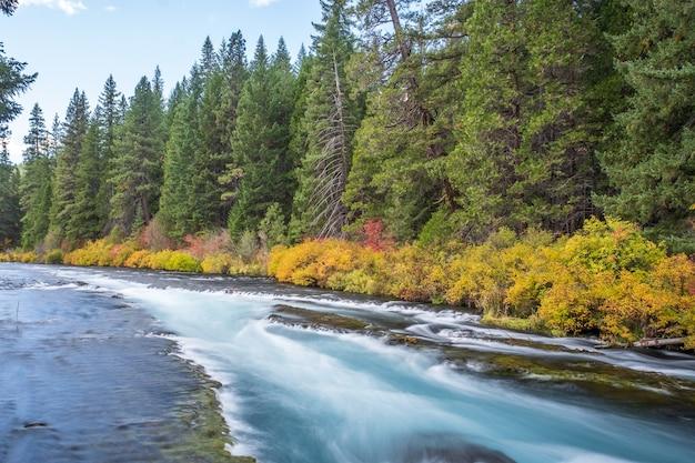 Rivière entourée de fleurs en automne pendant la journée