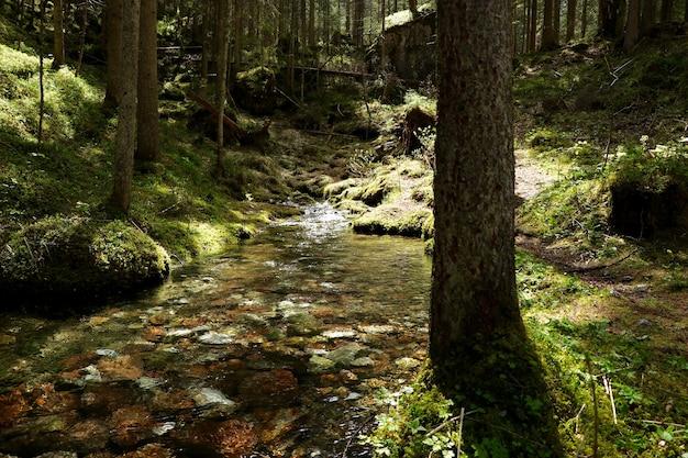 Rivière étroite dans une forêt entourée de beaux arbres verts