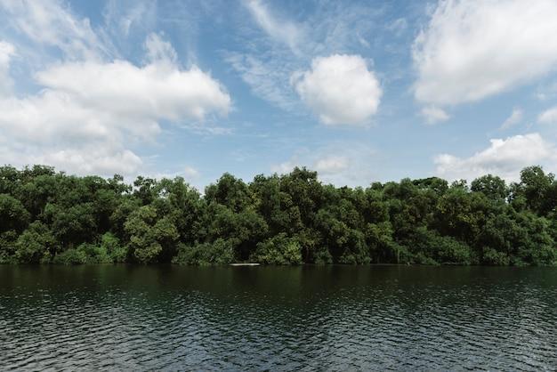 Rivière et forêt tropicale