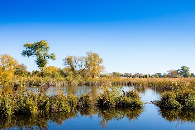 Rivière avec des fourrés de canne et d'arbres sous le ciel bleu