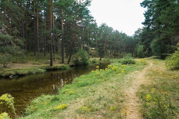 Rivière de montagne en diagonale à côté d'un chemin entouré de verdure et de pins verts