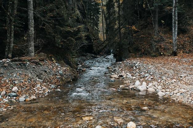 Rivière de montagne plan d'eau automne grands arbres forêt dense et feuilles mortes