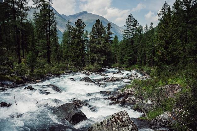 Une rivière de montagne puissante traverse la forêt.