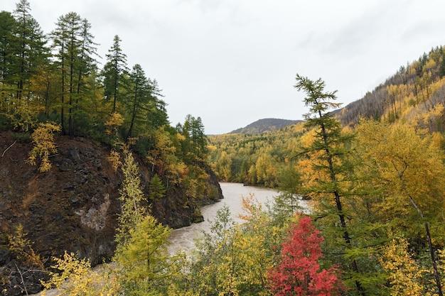 Rivière de montagne qui coule parmi la montagne roky à travers la forêt colorée en automne
