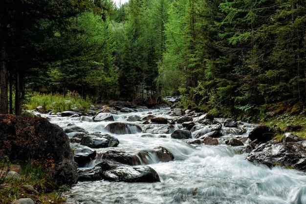 Rivière de montagne rocheuse parmi les pins. belle rivière à débit rapide dans la forêt de conifères.