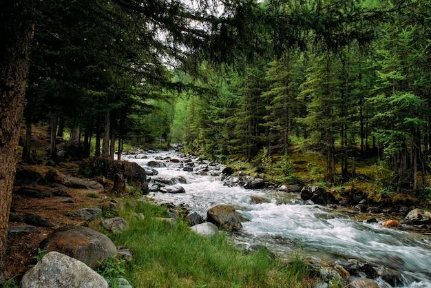 Rivière de montagne rocheuse parmi les pins