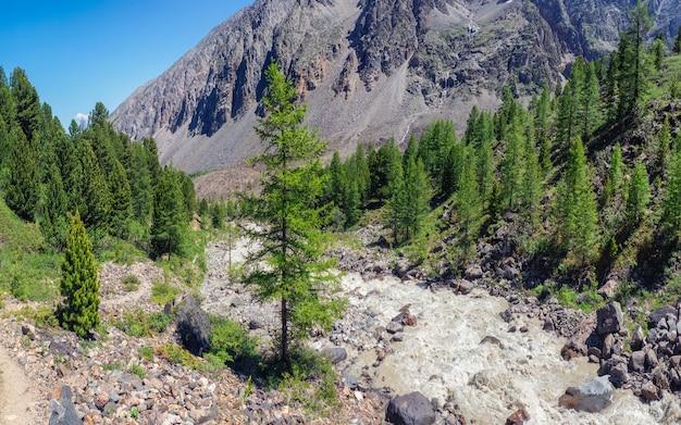 La rivière de montagne traverse la forêt. beau paysage alpin avec de l'eau azur en rivière rapide. puissance majestueuse nature des hauts plateaux.