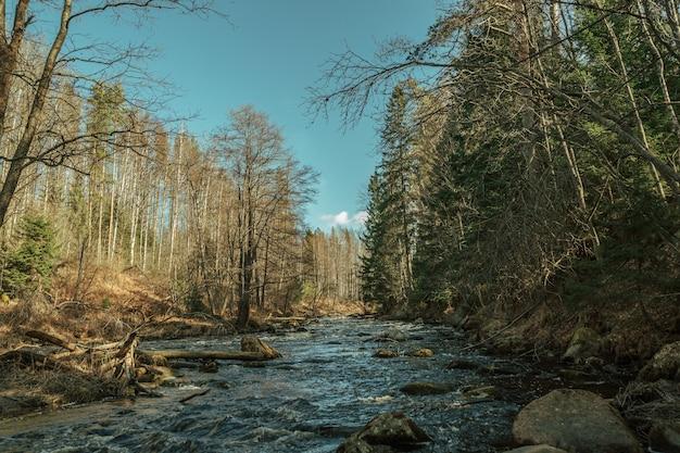 Rivière qui coule dans la forêt d'automne