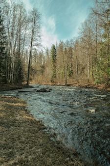 Rivière qui coule dans la forêt ensoleillée