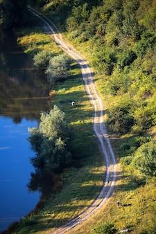 Rivière qui coule et route du village avec des arbres luxuriants sur le côté, deux vaches au pâturage en moldavie