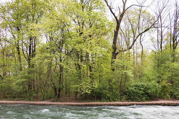 Rivière qui coule à travers la forêt