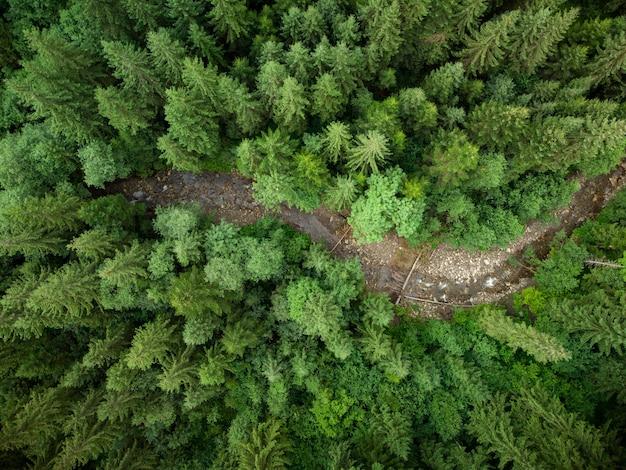 Rivière à sapin vue aérienne de haut en bas.