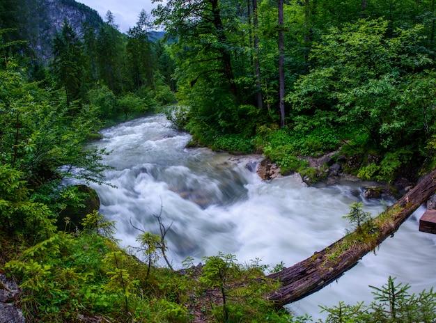 Rivière turbulente à travers les bois