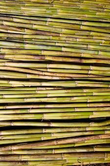 Rivière verte canne récolte texture de fond