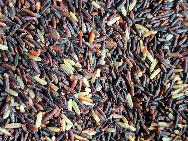 Riz gluant noir fermé en arrière-plan, sélectionnez la mise au point (riz gluant noir, riz noir)
