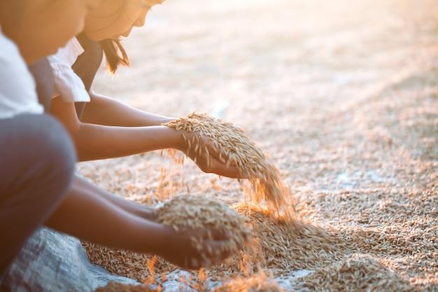 Riz paddy à la main de l'enfant dans le champ de la récolte du riz