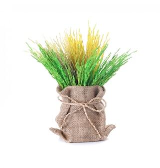 Riz paddy, oreille de riz isolé