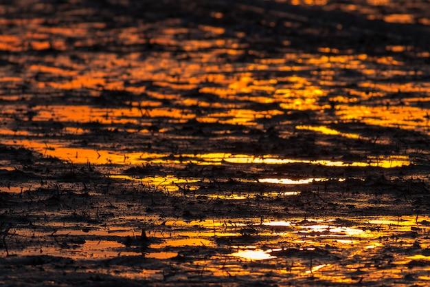 Rizière de boue et la lumière du gloden sur le coucher du soleil