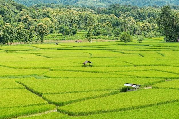 Rizière avec hutte de paysan, campagne de thaïlande