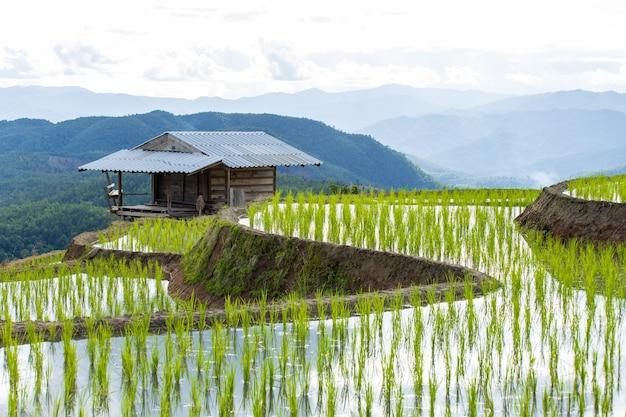 Rizière en terrasse à mae cham chiangmai dans le nord de la thaïlande