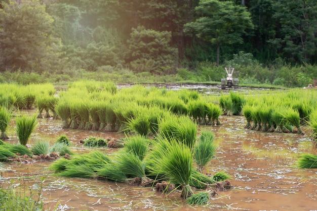 Rizière en terrasse rurale verte avec de l'eau