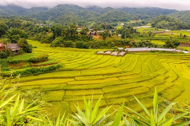 Rizière en terrasse verte à mae la noi, province de maehongson, thaïlande