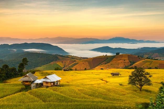Rizière en terrasse verte à pa pong pieng, mae chaem, province de chiang mai, thaïlande