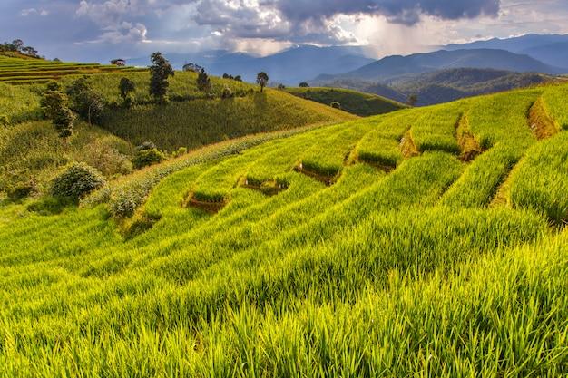 Rizière verte en terrasse à pa pong pieng, mae chaem, chiang mai, thaïlande