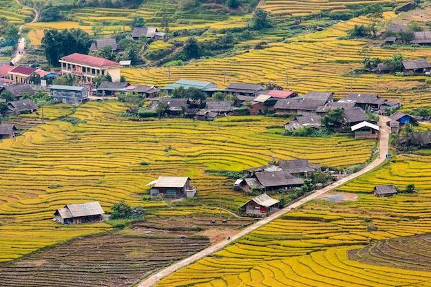 Rizières au nord-ouest du vietnam