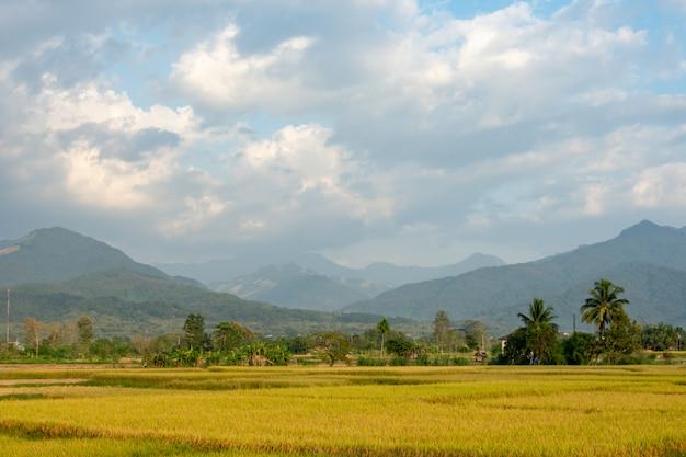 Rizières dans la campagne fond des montagnes et des arbres.