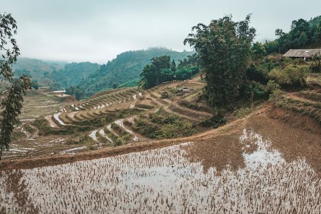 Rizières inondées. récolte récoltée. sapa, vietnam, hiver.