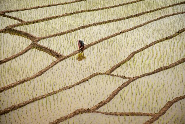 Rizières en terrasses à chiang mai highlands du nord en thaïlande, 30/04/2021