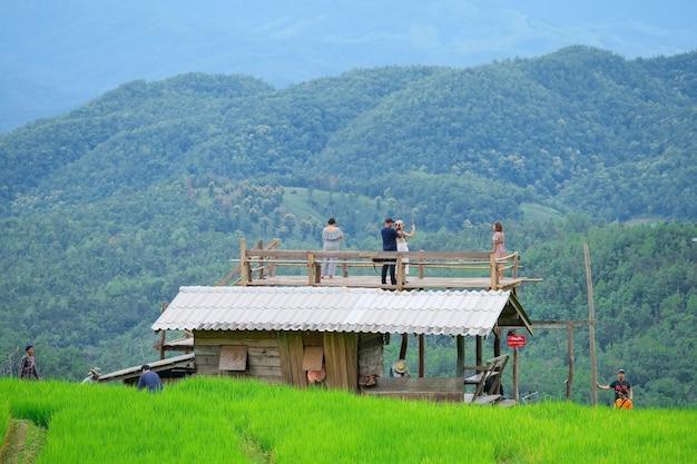 Rizières en terrasses de pa pong piang dans le nord de chiangmai en thaïlande.