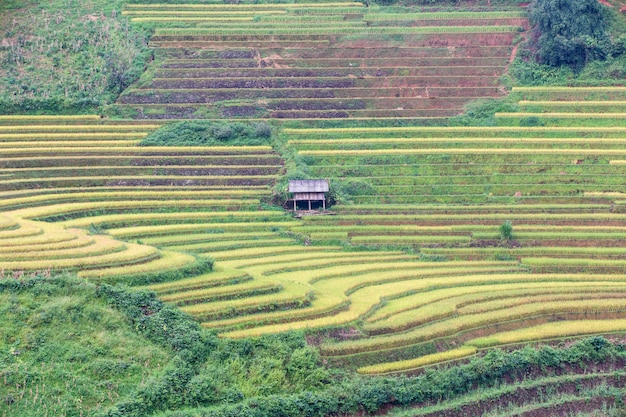 Rizières en terrasses vertes à mu cang chai