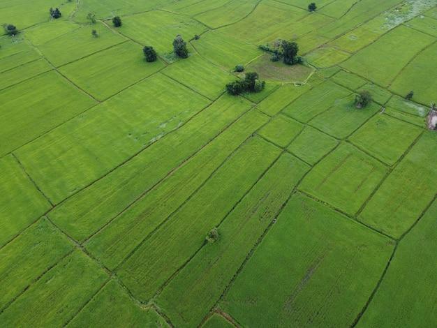 Rizières vertes fraîches, photographies aériennes de drones