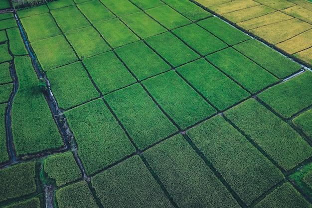 Rizières vertes d'en haut à la campagne