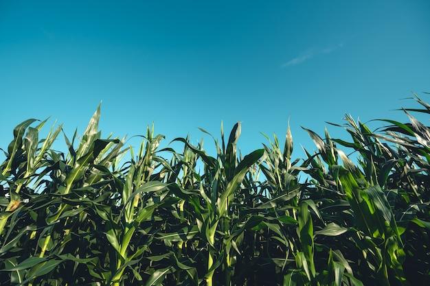 Rizières vertes vues sur les rizières, les rizières et les montagnes