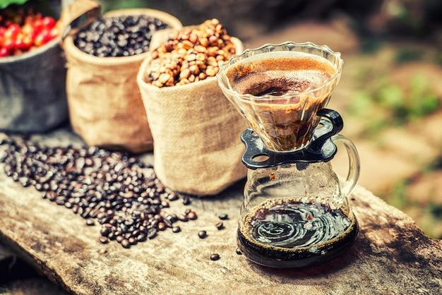 Robusta, arabica, baies de café et grains de café
