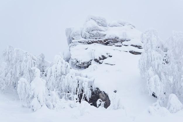 Roche couverte de neige et arbres couverts de givre sur le col de montagne en hiver