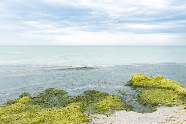 Rochers avec des algues un jour de pluie pluvieux