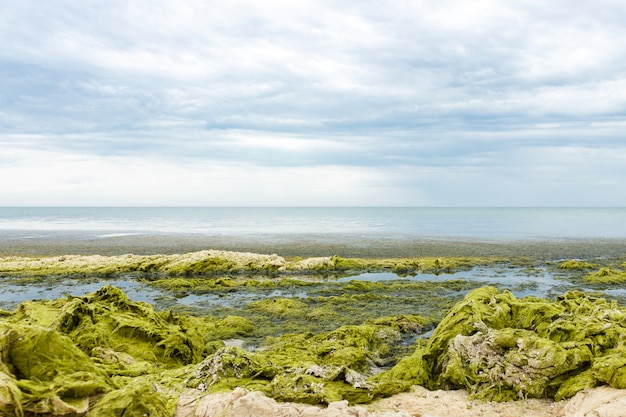Rochers aux algues un jour de pluie du surf, ciel couvert gris. concept d'écologie et de catastrophes naturelles