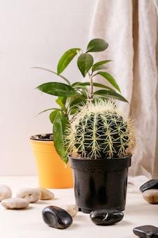 Roches décoratives blanches et noires et cailloux avec cactus et plante succulente sur mur en bois gris